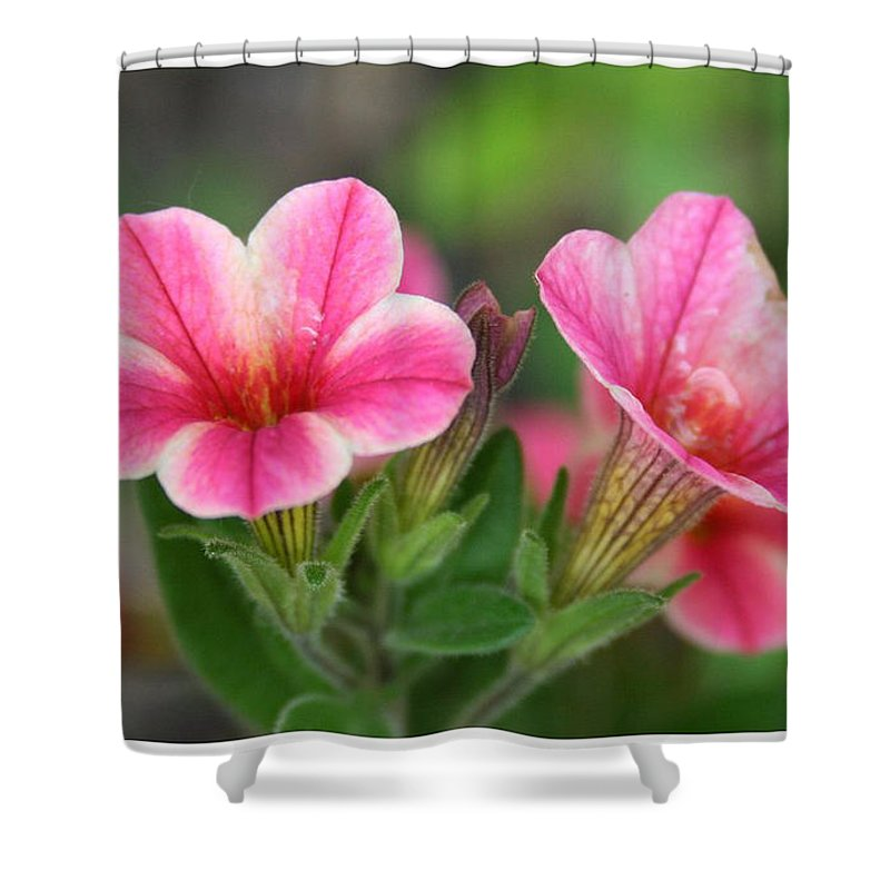 Flowers Shower Curtain featuring the photograph A Sunny Afternoon by Linda Sannuti