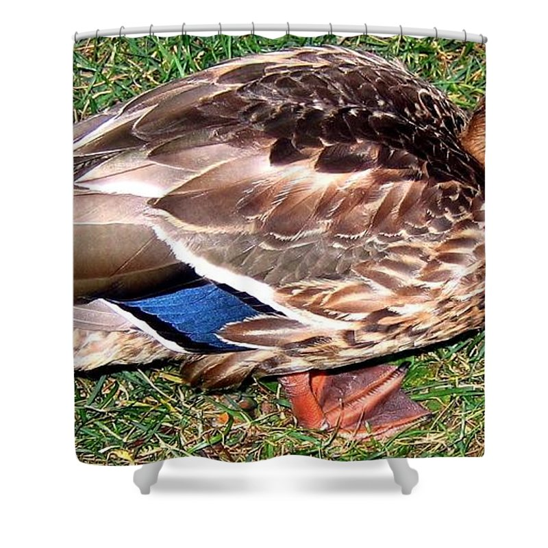 Duck Shower Curtain featuring the photograph A Tame Crow by Will Borden