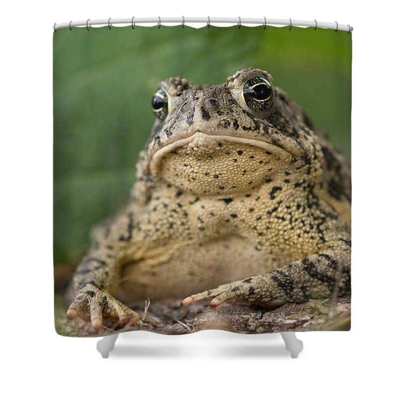 Photography Shower Curtain featuring the photograph A Toad Appears To Be Frowning He Sits by Joel Sartore