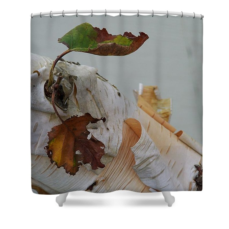 Birch Shower Curtain featuring the photograph A Touch Of Fall by Gale Cochran-Smith