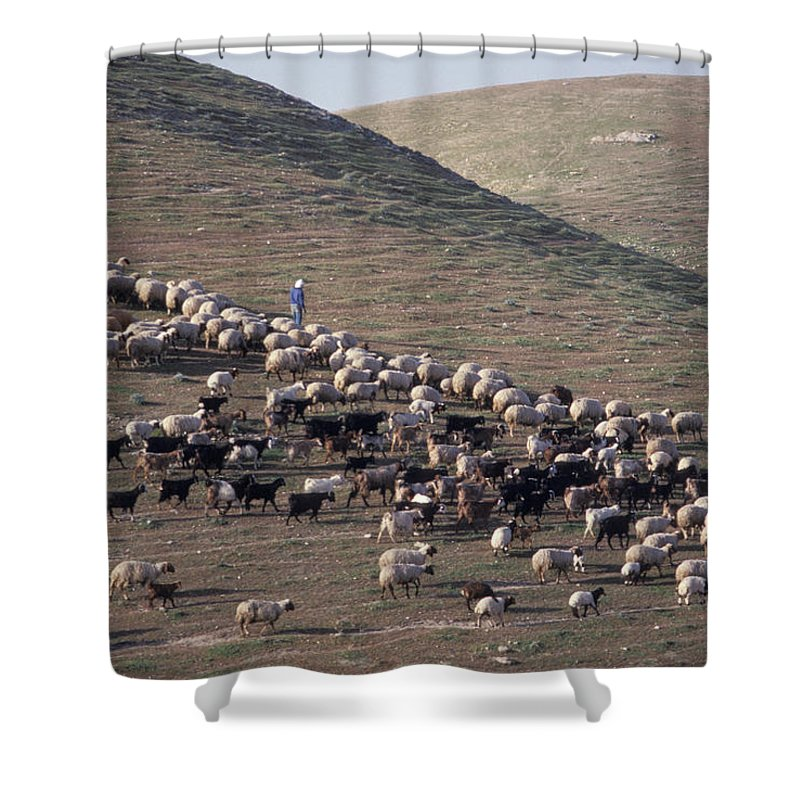 Shepherd Shower Curtain featuring the photograph A View Of Sheep In The Judean Desert by Richard Nowitz