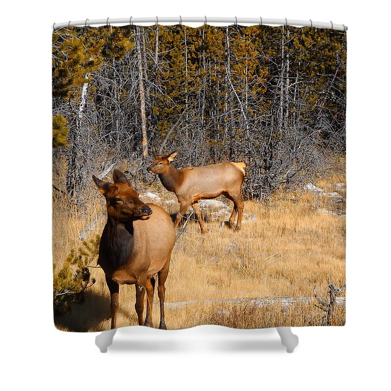 Elk Shower Curtain featuring the photograph A Warm Welcome by Adam Cornelison