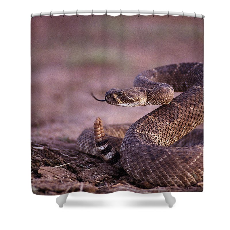 North America Shower Curtain featuring the photograph A Western Diamondback Rattlesnake by Joel Sartore