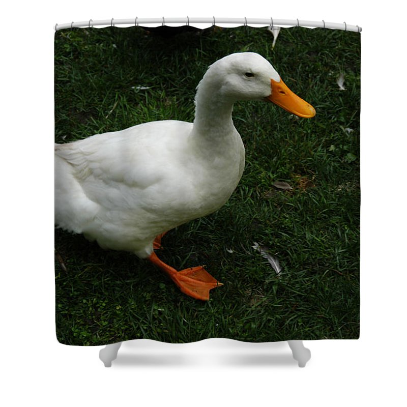 State College Shower Curtain featuring the photograph A White Duck by Stacy Gold