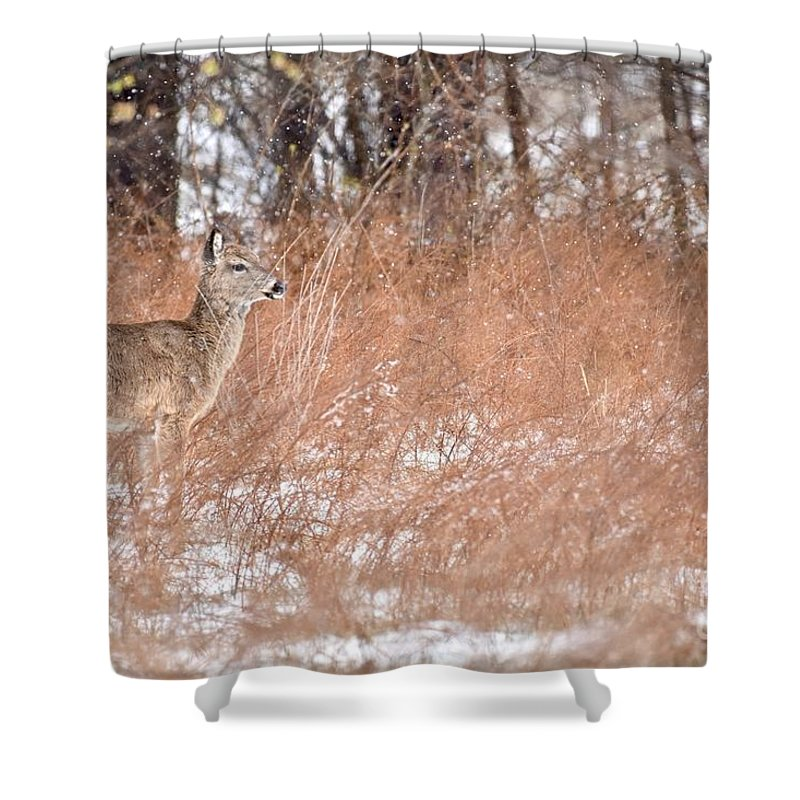 Animal Shower Curtain featuring the photograph A White-tailed Deer In A Snow Storm by Jeramey Lende