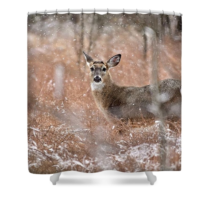Animal Shower Curtain featuring the photograph A White-tailed Deer In The Snow by Jeramey Lende