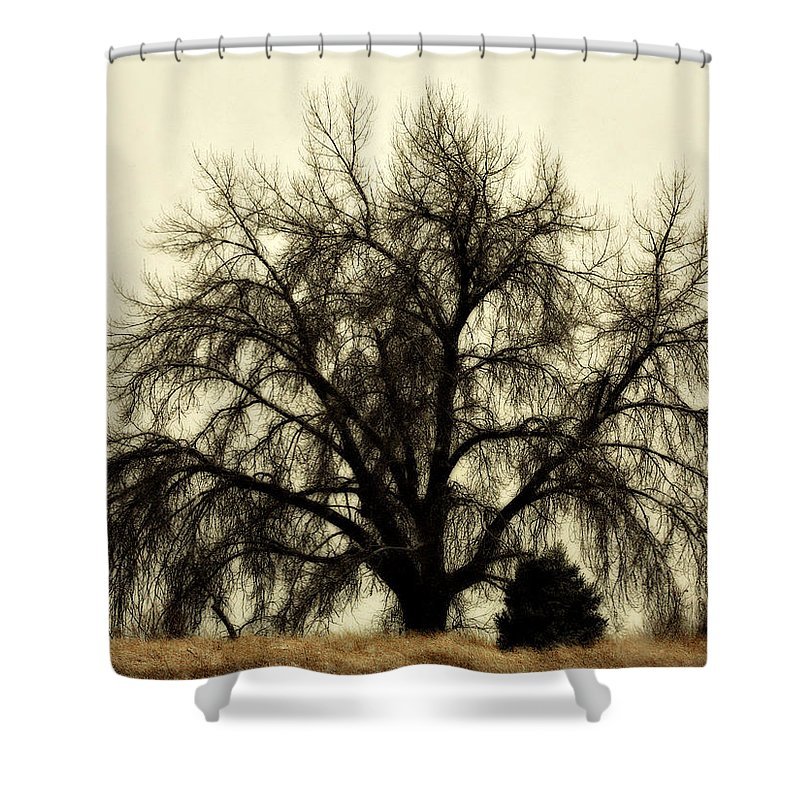 Tree Shower Curtain featuring the photograph A Winter's Day by Marilyn Hunt