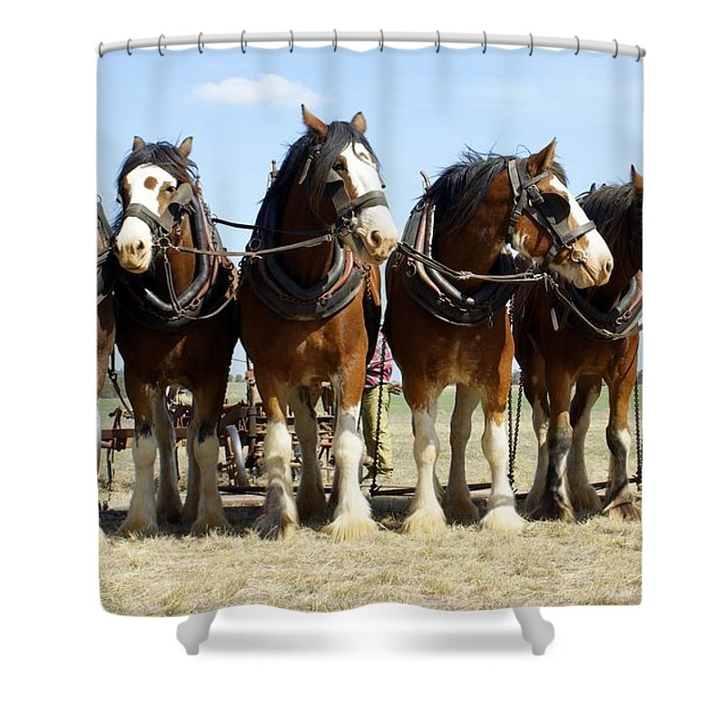 Kathryn Potempski Shower Curtain featuring the photograph A Working Day by Kathryn Potempski