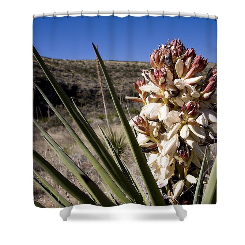 Carlsbad Caverns National Park Shower Curtain featuring the photograph A Yucca Plant Blossoms In The Desert by Stephen St. John