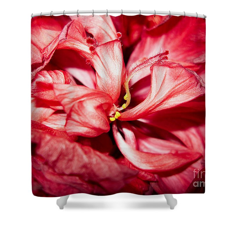 Abstract Shower Curtain featuring the photograph Abstract Flower by Tony Cordoza