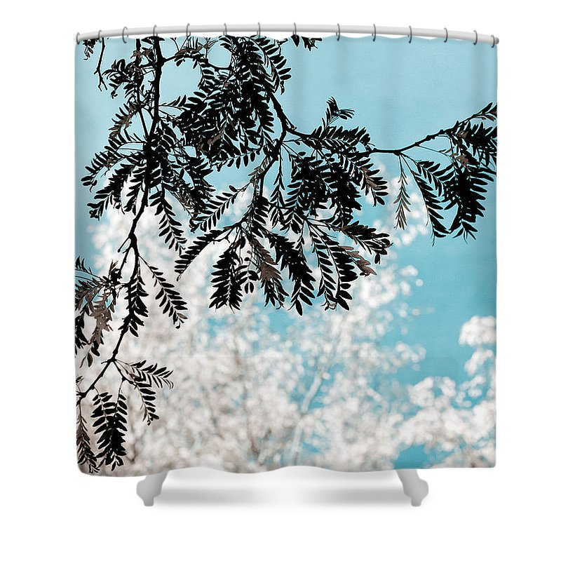 Tree Shower Curtain featuring the photograph Abstract Locust by Marilyn Hunt