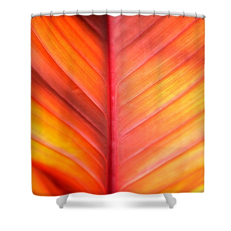 Pattern Shower Curtain featuring the photograph Abstract by Tony Cordoza