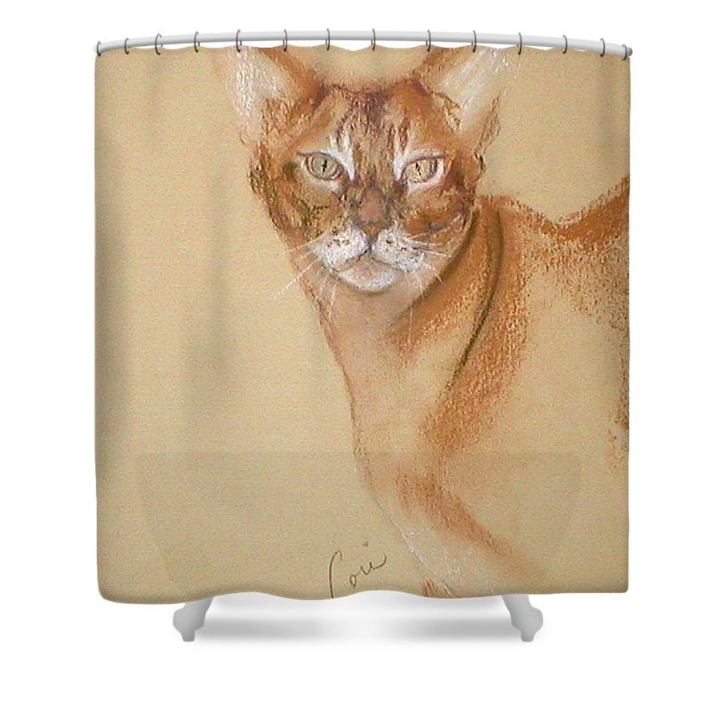 Pastel Shower Curtain featuring the drawing Abyssinian by Cori Solomon
