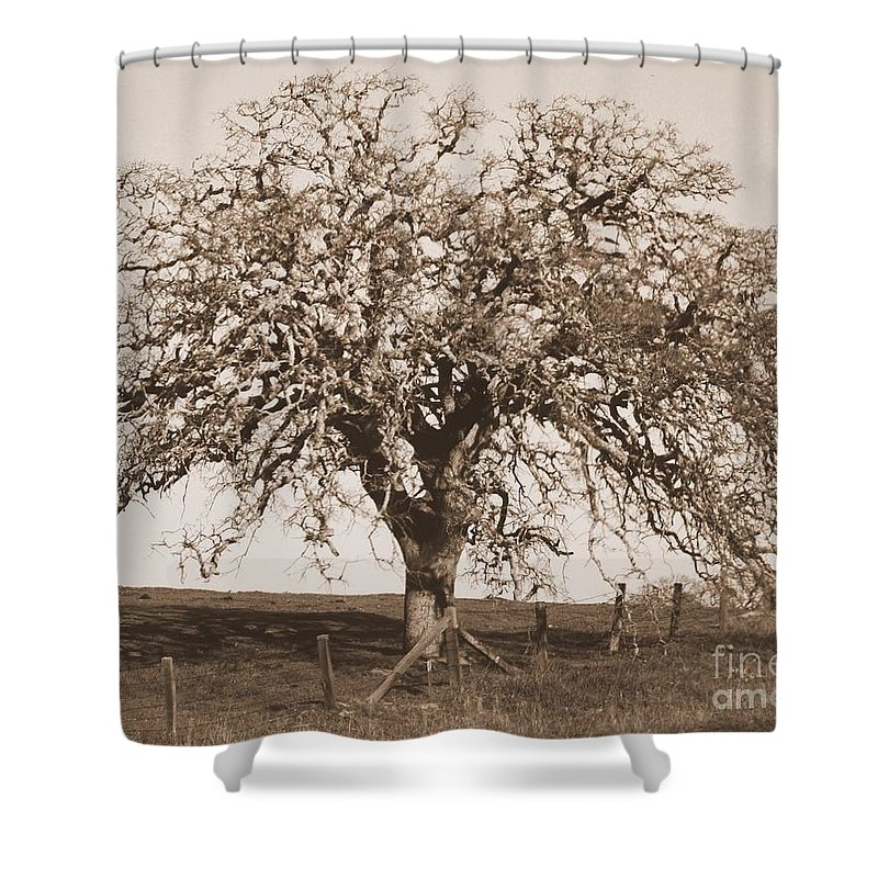 Tree Shower Curtain featuring the photograph Acacia Tree In Sepia by Carol Groenen