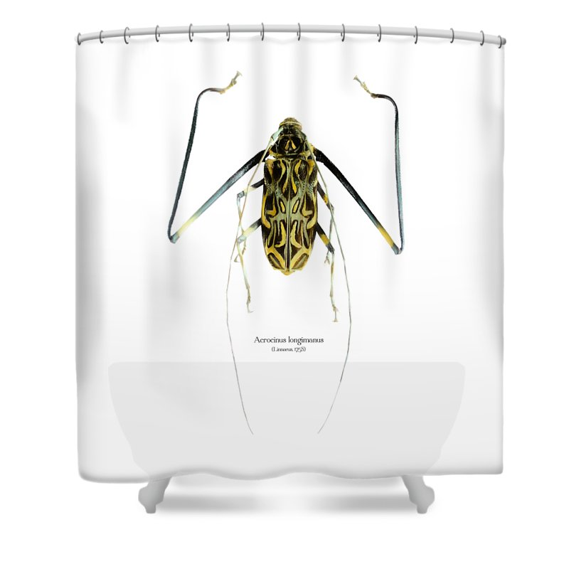 Nature Shower Curtain featuring the digital art Acrocinus II by Geronimo Martin Alonso