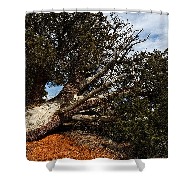 Nature Shower Curtain featuring the photograph Across The Path by Christopher Holmes