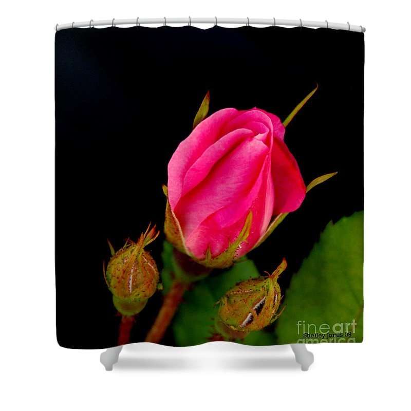 Rose Shower Curtain featuring the photograph Admirers by Shelley Jones