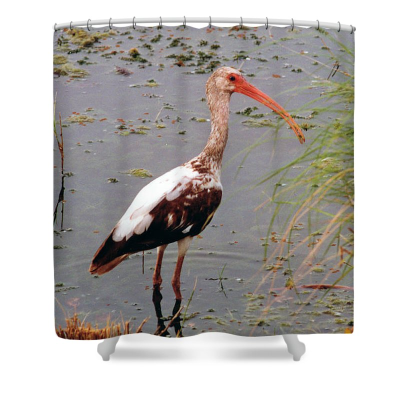 Ibis Shower Curtain featuring the photograph Adolescent Ibis by Ron Swonger