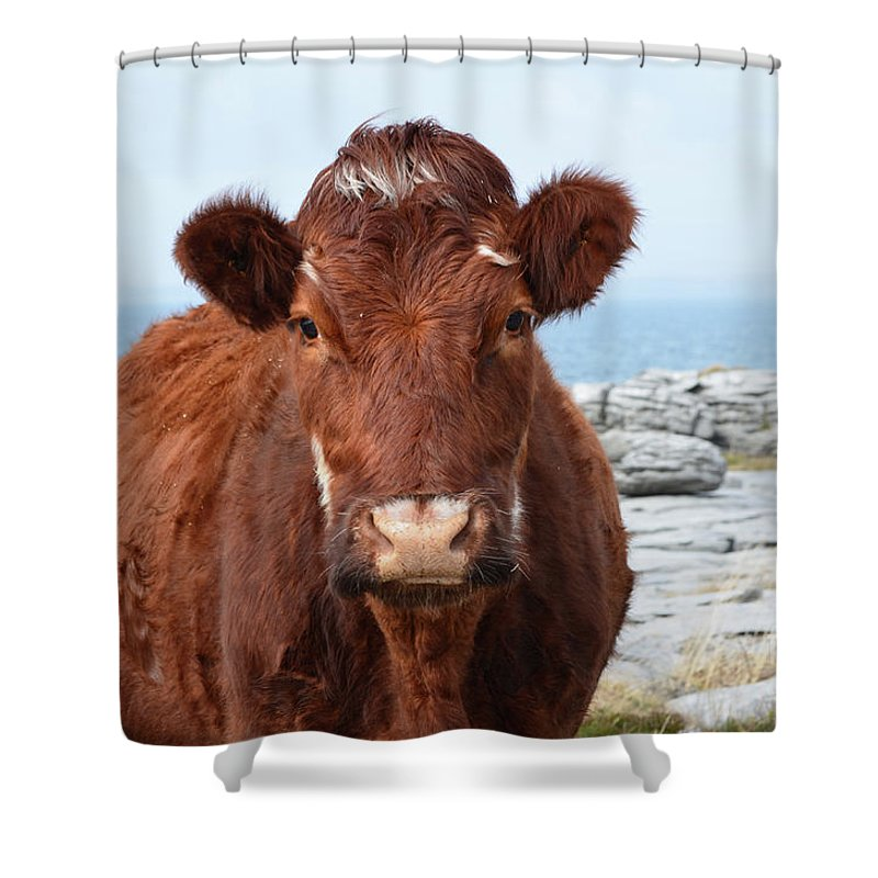 Cow Shower Curtain featuring the photograph Adorable Brown Cow Standing On The Burren by DejaVu Designs