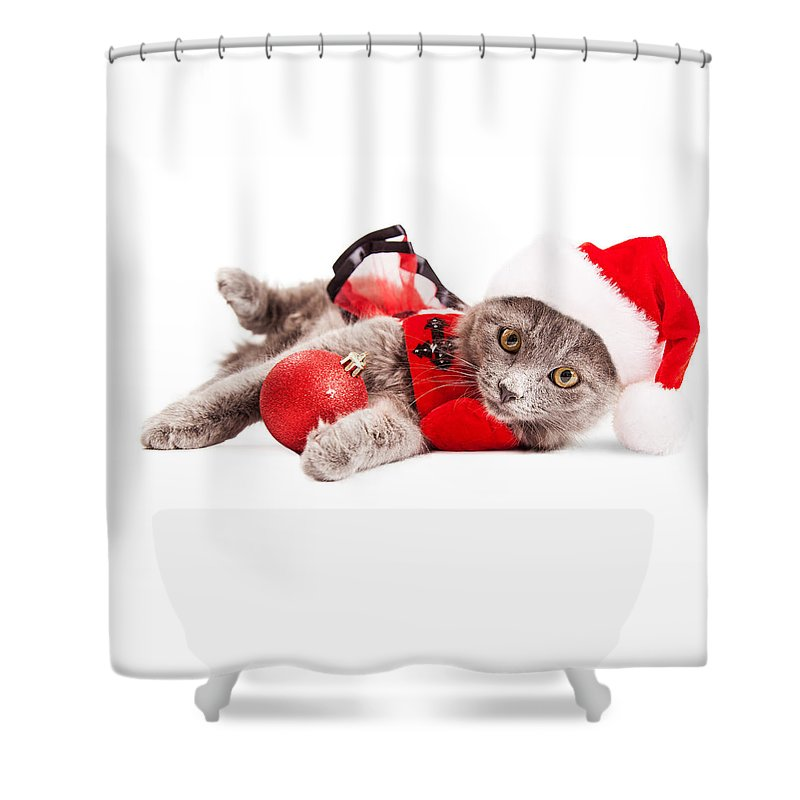 Adorable Shower Curtain featuring the photograph Adorable Christmas Kitten Over White by Susan Schmitz
