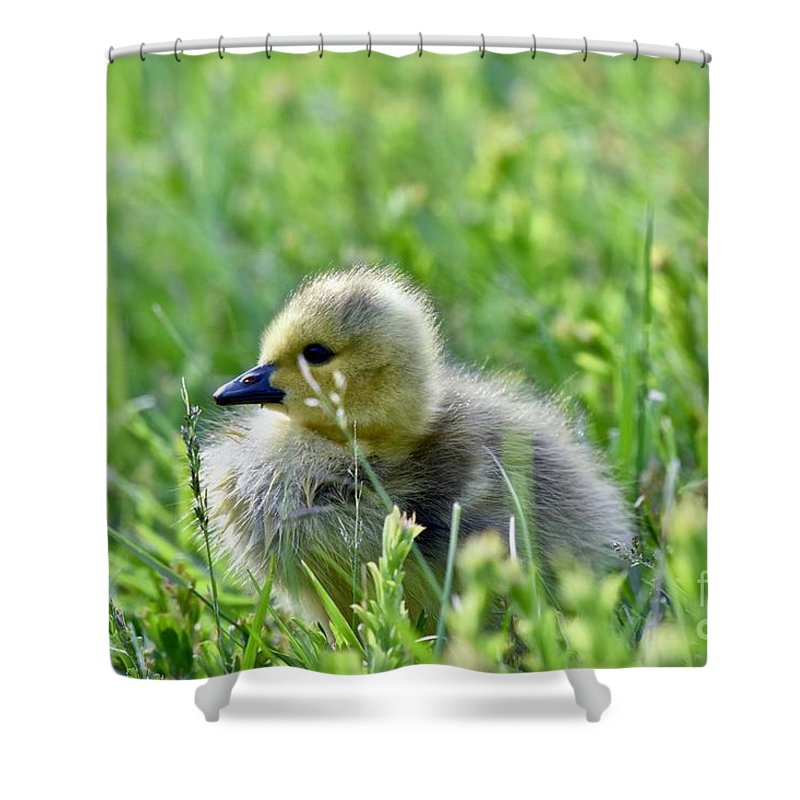 Adorable Shower Curtain featuring the photograph Adorable Goose Chick by Jeramey Lende