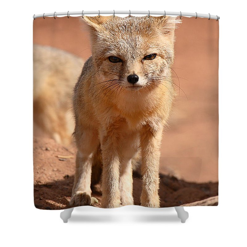Fox Shower Curtain featuring the photograph Adult Kit Fox Ears And All by Max Allen