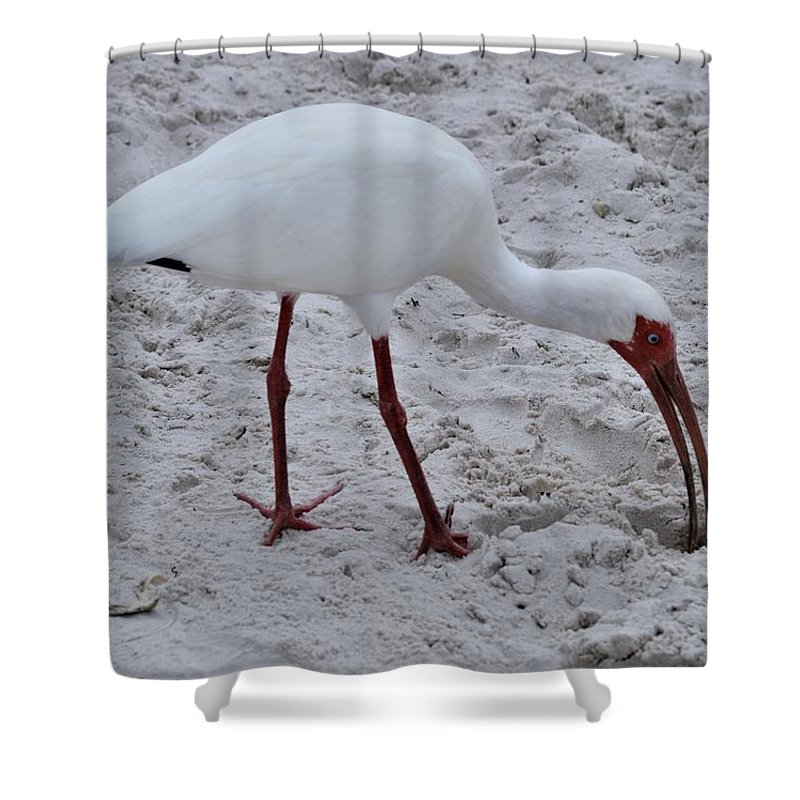 Adult White Ibis Shower Curtain featuring the photograph Adult White Ibis by Warren Thompson