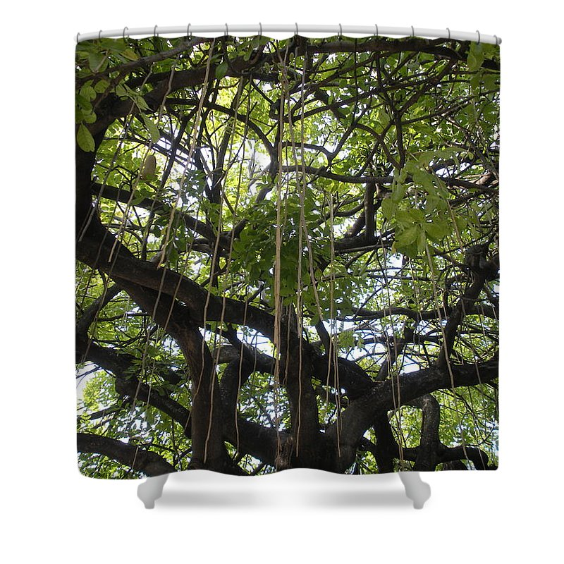 Trees Shower Curtain featuring the photograph Aerial Network I by Maria Bonnier-Perez