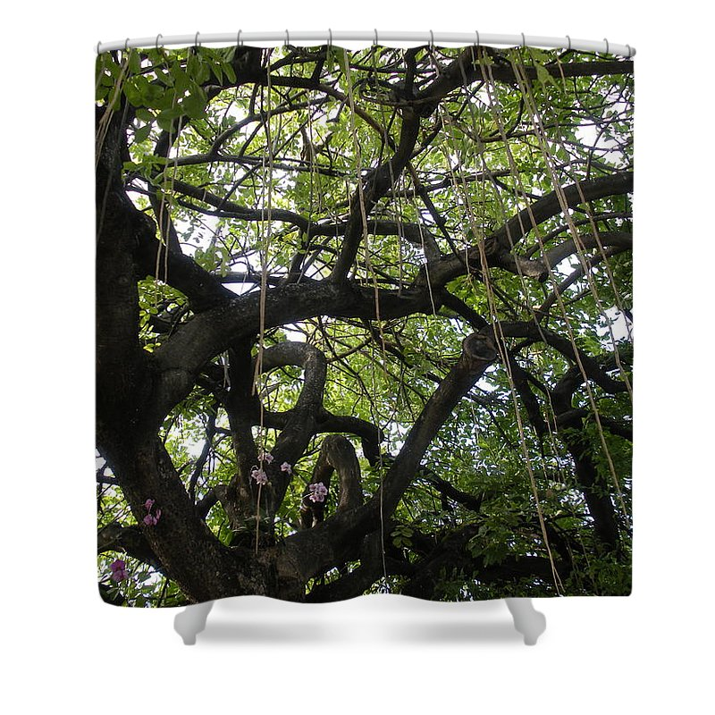 Trees Shower Curtain featuring the photograph Aerial Network II by Maria Bonnier-Perez