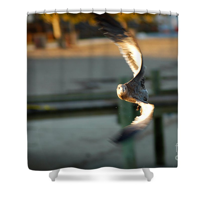 Clay Shower Curtain featuring the photograph Aeronautical Acrobatics by Clayton Bruster