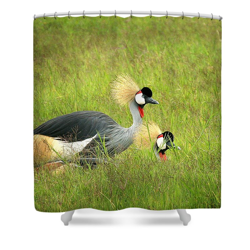Crane Shower Curtain featuring the photograph African Gray Crown Crane by Joseph G Holland