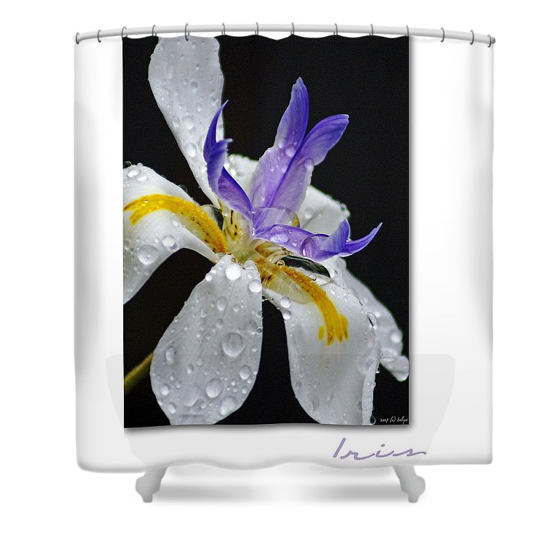 Flowers Shower Curtain featuring the photograph African Iris by Holly Kempe