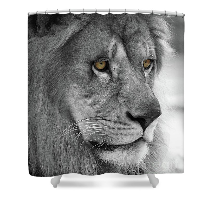Lion Shower Curtain featuring the photograph African Lion #8 Black And White T O C by Judy Whitton