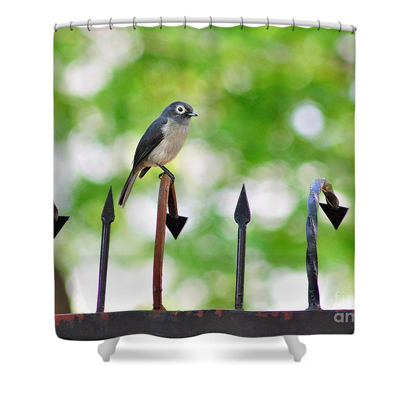 Africa Shower Curtain featuring the photograph African White-eye Bird by Morris Keyonzo