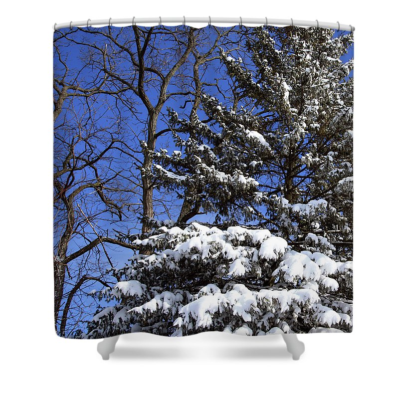 Blizzard Shower Curtain featuring the photograph After The Blizzard by Joanne Coyle