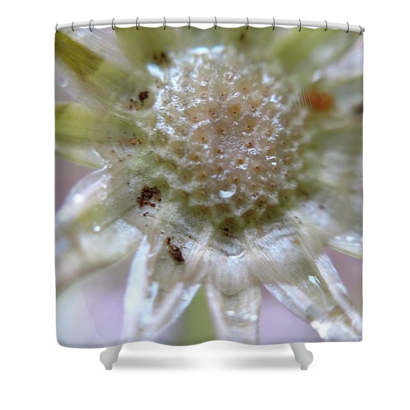 Flower Shower Curtain featuring the photograph After The Glitter Fades by Bruce Carpenter