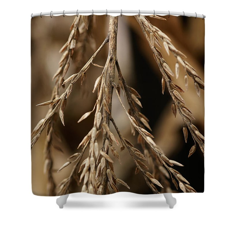Corn Shower Curtain featuring the photograph After The Harvest - 1 by Linda Shafer