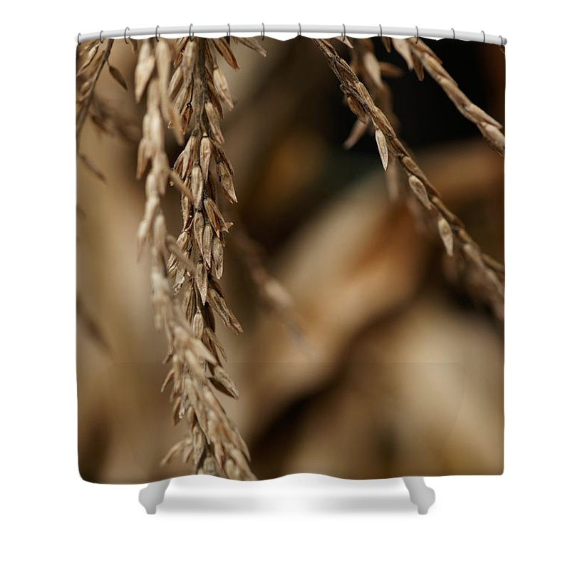 Corn Shower Curtain featuring the photograph After The Harvest - 3 by Linda Shafer