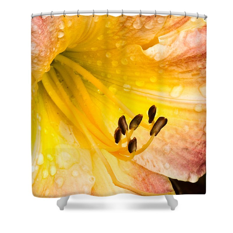 Daylily Shower Curtain featuring the photograph After The Rain by Ches Black