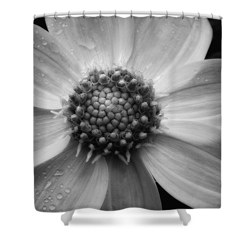 Floral Shower Curtain featuring the photograph After The Rain by Donna Blackhall