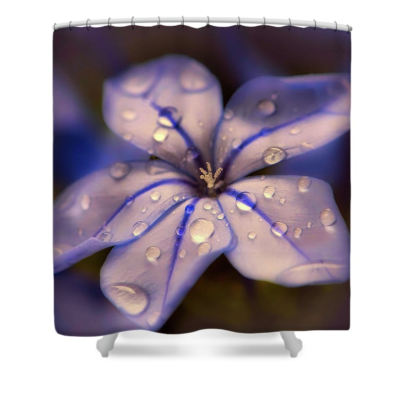 Rain Shower Curtain featuring the photograph After The Rain by Pixabay