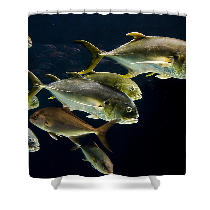Water Shower Curtain featuring the photograph Against The Tide by Ches Black