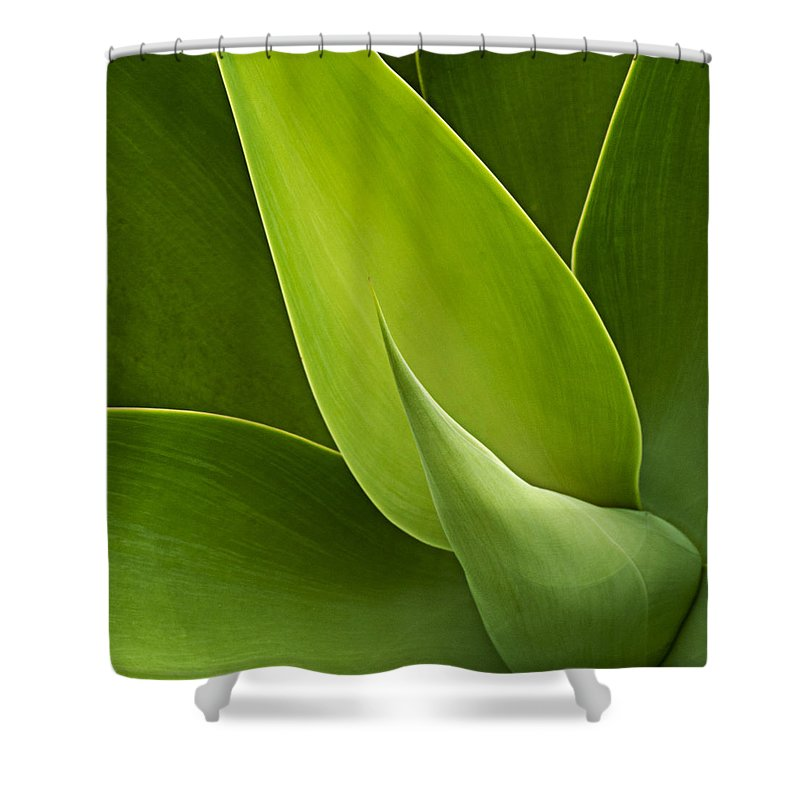 Green Shower Curtain featuring the photograph Agave by Heiko Koehrer-Wagner