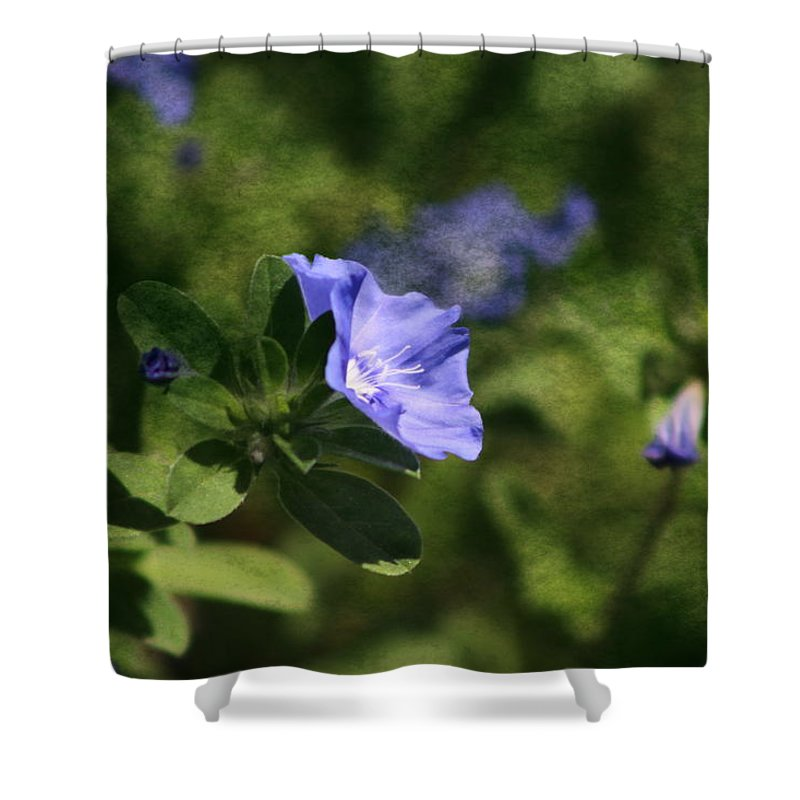 Cornflower Blue Shower Curtain featuring the photograph Ageless Beauty in Cornflower Blue by Colleen Cornelius