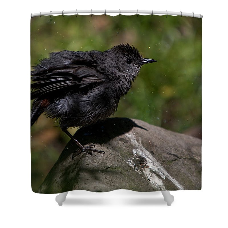 Bird Shower Curtain featuring the photograph Ah Thats Much Better by Chris Lord