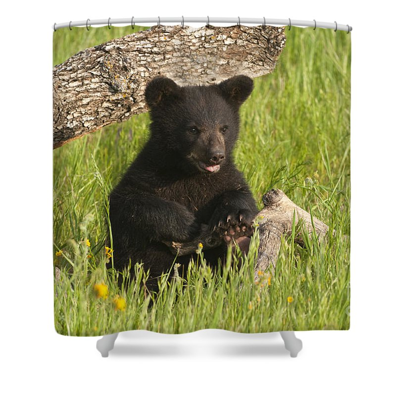 Bear Shower Curtain featuring the photograph Ain't I Cute by Sandra Bronstein