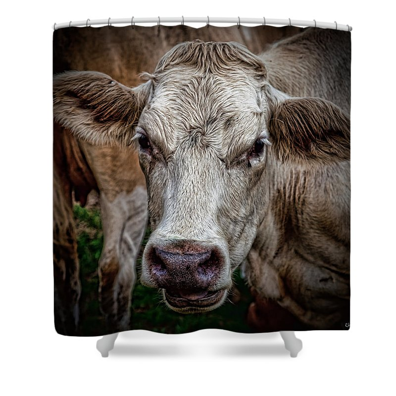 Cow Shower Curtain featuring the photograph Ain't She Beautiful by Chris Lord