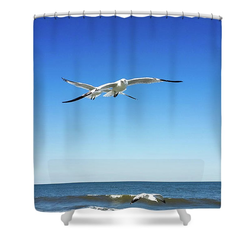 Shower Curtain featuring the photograph Air Play by Belinda Jane