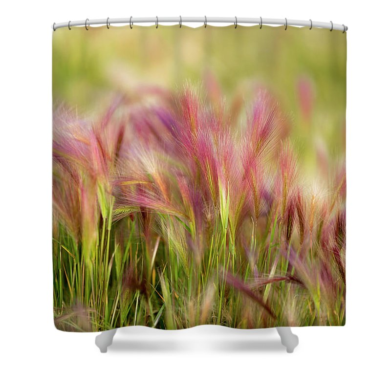 Abstract Shower Curtain featuring the photograph Alaska Foxtail by Scott Slone
