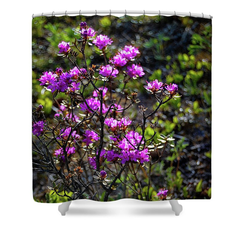 Alaska Shower Curtain featuring the photograph Alaska Wildflowers by Crewdson Photography
